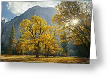 1m6611-oak Trees And Middle Cathedral Rock In Autumn Greeting Card