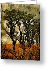 Abstract Tree Greeting Card
