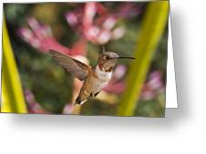Allen's Hummingbird Greeting Card by Mike Herdering