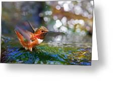 Allen's Hummingbird Greeting Card by Thy Bun