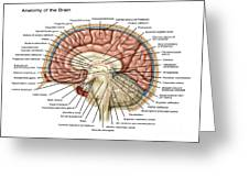 Anatomy Of The Brain, Illustration Greeting Card