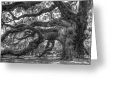 Angel Oak Tree Charleston Sc Greeting Card by Dustin K Ryan