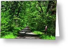 Appalachian Trail In Maryland Greeting Card
