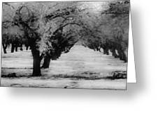 Apple Orchards In Dixon Greeting Card