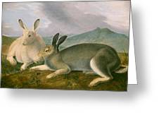 Arctic Hare Greeting Card