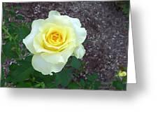 Australia - Yellow Rose Flower Greeting Card