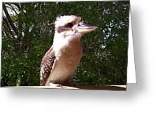 Australia - Kookaburra Full Body Look Greeting Card