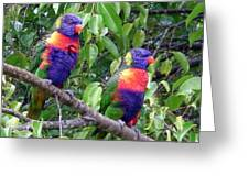 Australia - Two Brightly Coloured Lorikeets Greeting Card