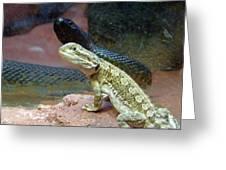 Australia - The Taipan Snake Greeting Card