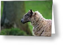 Baa Baa Greeting Card