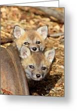 Baby Fox Kits Greeting Card