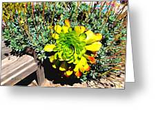 Succulent Study 2 Greeting Card