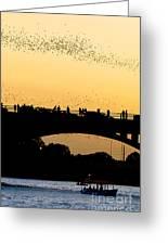 Bat Flight In Austin Texas Greeting Card