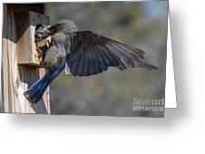Beak To Beak Greeting Card