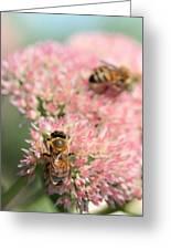 2 Bees Greeting Card