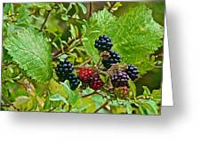 Berries In Vicente Perez Rosales National Park Near Puerto Montt-chile  Greeting Card