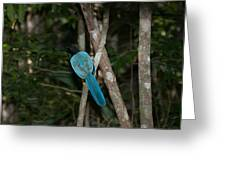 Birds From Coba Greeting Card