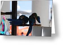 2 Birds Greeting Card