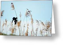 Black Bird In Cat Tails Greeting Card