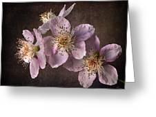 Blackberry Flowers Greeting Card