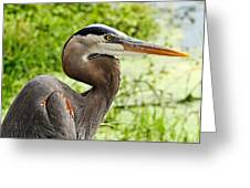 Blue Heron Heads Up Greeting Card