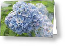 Blue Hydrangea At Rainy Garden In June, Japan Greeting Card