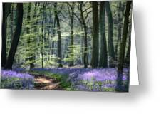 Bluebell Path Greeting Card