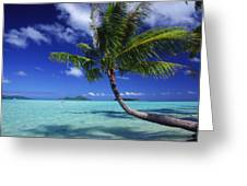 Bora Bora, Palm Tree Greeting Card