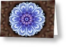 Bright Eyed Greeting Card
