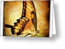 Broad Banded Swallowtail Greeting Card