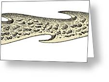 Bronze Age Barbed Point Harpoon Greeting Card