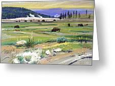 Buffaloes In Yellowstone Greeting Card