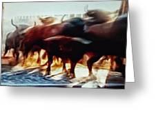 Bull Run Greeting Card
