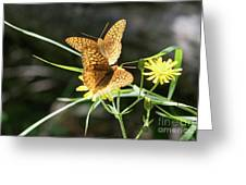 2 Butter Flies Greeting Card