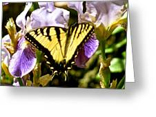 Butterfly Collection Design Greeting Card