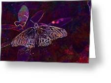 Butterfly Insect Wing Wildlife Bug  Greeting Card