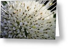 Buttom Bush Greeting Card