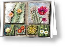Cactus Collage Greeting Card