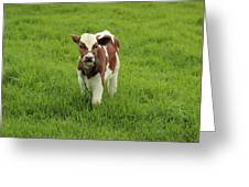 Calf In A Pasture Greeting Card