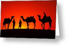 Camels At Sunset Greeting Card