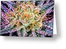 Cannabis Varieties Greeting Card