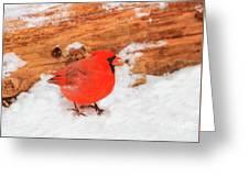 #2 Cardinal In Snow Greeting Card