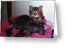 2 Cats In The Flowers Greeting Card