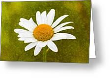 Chamomile Watercolor Greeting Card