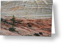 Checkerboard Mesa In Zion National Park Greeting Card