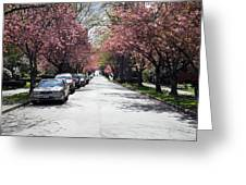 Cherry Blossom In Vancouver City Greeting Card