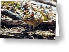 Chipmunk At Heckrodt Greeting Card