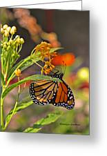 Clinging Butterfly Greeting Card