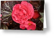 Close-up Of Pink Flowers In Bloom Greeting Card