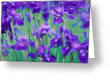 Close-up Of Purple Flowers Greeting Card
